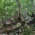 Escursione alle sorgenti di Capofiume 8