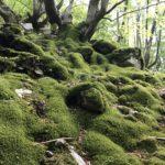 Escursione alle sorgenti di Capofiume 10