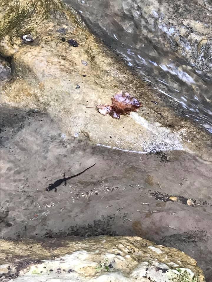 Il selvaggio Sentiero dell'Acqua @ Parco Regionale dei Monti Lucretili